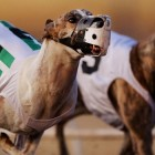 Tucson Greyhound Park Runs Its Final Race