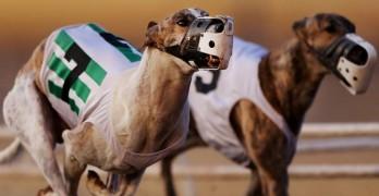 Tucson Greyhound Park Runs Its Final Race