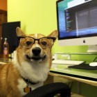 Man's Best Colleague: Study Reveals Ideology on Pets in the Workplace