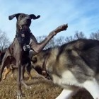 Video: High-Def in the Dog Park
