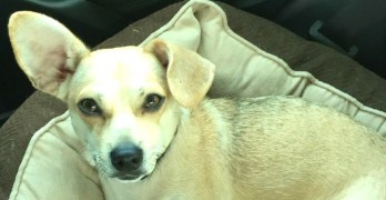 Special Needs Dog in Florida Will Die If Not Adopted