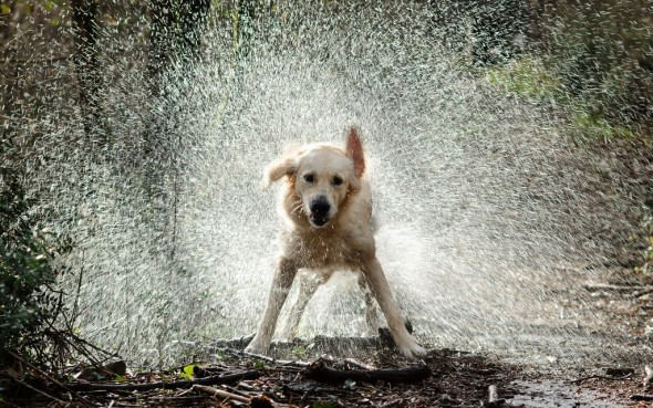 water dog 1