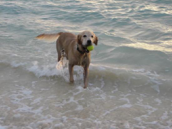 water dog 5
