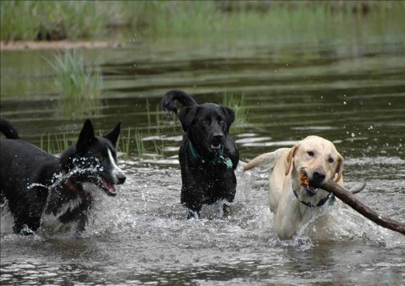 water dogs 7