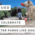 Rescued Dogs Celebrate Summer at the Water Park
