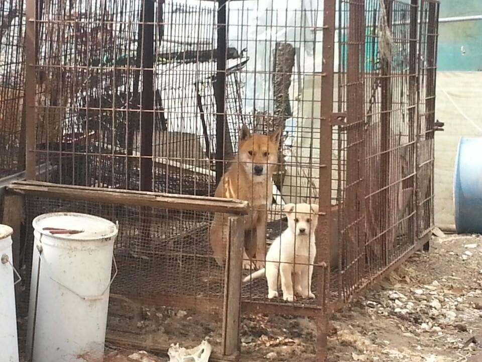 Furbabies Aren't Food! Two Dogs Saved From South Korea ... - photo#45