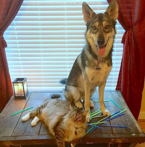 7.1.16 - Dog Picks Out His Very Own Shelter Kitty to Be His Best Friend3