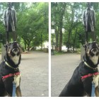 Dog's Mom Writes Hilarious Letter to Scary Statue of Lincoln on His Behalf