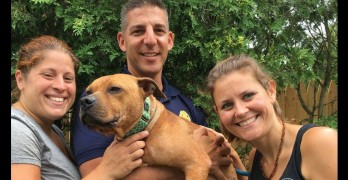 Rhode Island SPCA and Handsome Dan's Rescue Need Your Help Locating this Dog's Abusers