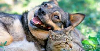 Michelson Found Animals Launches the Third Annual Saving Pets Challenge!