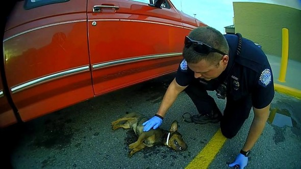 7.12.16 - Police Save Hanging Dog3