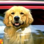 Vermont Has Now Made It Legal to Save Dogs and Children from Hot Cars
