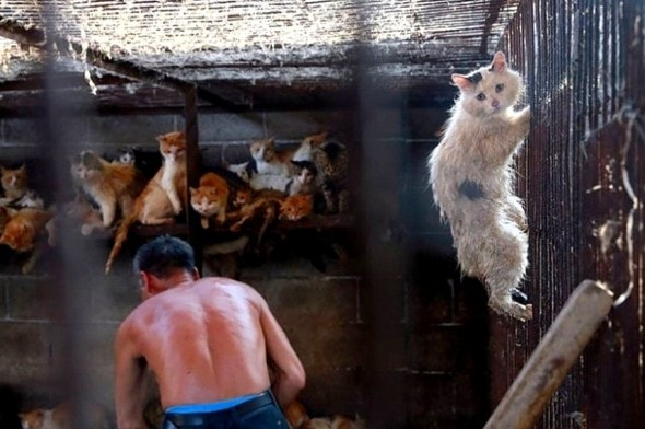 7.14.16 - South Korea Dog Slaughter - Boycott the Olympics4