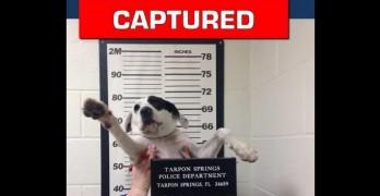 "Florida Police Take Mug Shot of Cutest ""Fugitive"" Ever to Help Find Her Family"