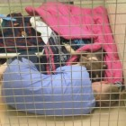 Shelter Worker Gets into Kennel to Comfort Terrified Abandoned Dog