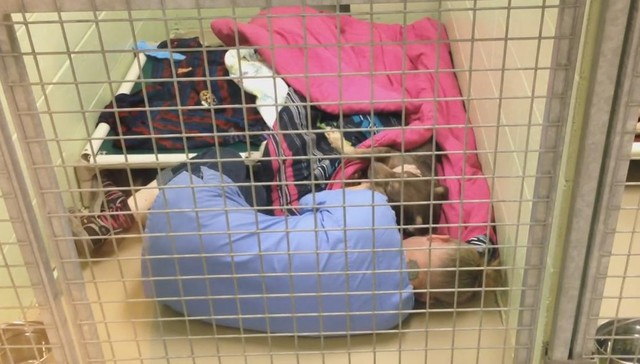Shelter Worker Gets Into Kennel To Comfort Terrified Abandoned Dog - Dog escapes from kennel to comfort abandoned crying puppies