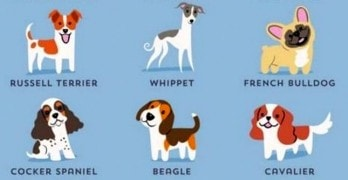 What's Your Dog's Nationality?