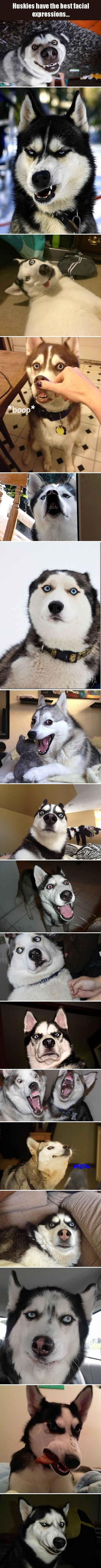 7.19.16 - Huskies Have the Best Facial Expressions