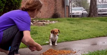 Forgotten Dogs of the Fifth Ward Teams up With WA2S Films to Rescue a Puppy