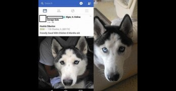 Social Media Users Unite to Assist Woman Find Her Missing Dog