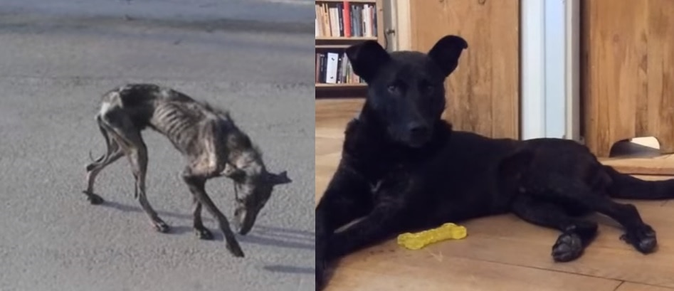 Amazing Before and After of Billy, and Why His Foster Mom Didn't Keep Him