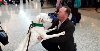 The SPCA Now Has Therapy Dogs Waiting to Cheer You Up After a Stressful Flight