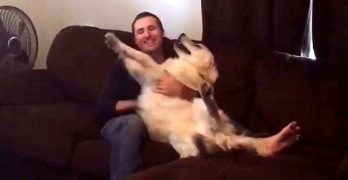 Dog Shows Ultimate Faith in His Human by Learning to Trust Fall