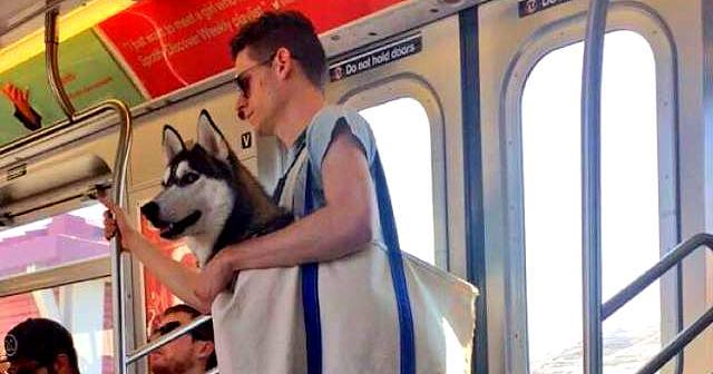 Man Put Large Dog In Even Larger Bag When Traveling To