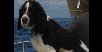 Dog Lost At Sea Rescued by Passing Lobster Boat Worker
