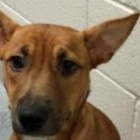 Abused Dog Sets Shelter Record for Shortest Stay in North Carolina Shelter
