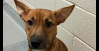 Abused Dog Sets Shelter Record for Shortest Stay in North Carolina Shelter