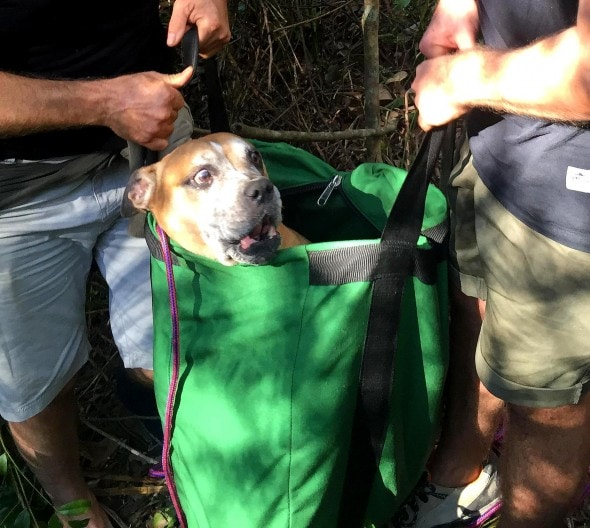 7.25.16 - Inventive Hikers Rescue Exhausted Dog11
