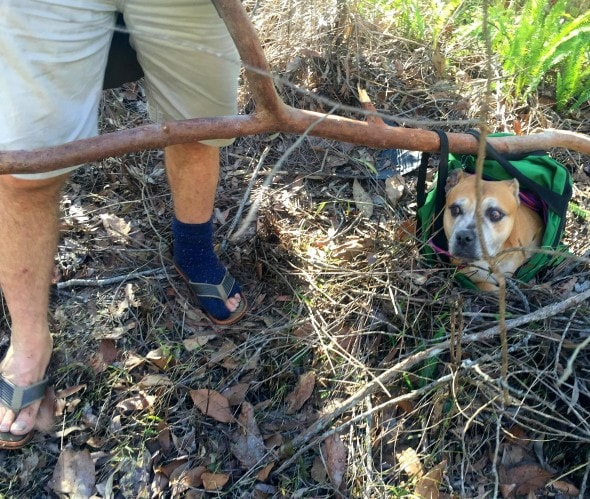 7.25.16 - Inventive Hikers Rescue Exhausted Dog13