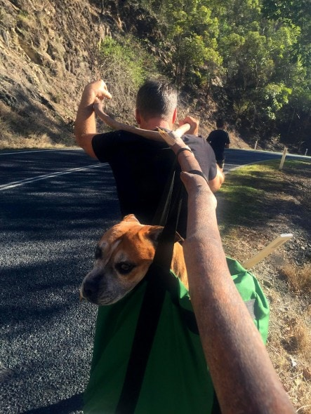 7.25.16 - Inventive Hikers Rescue Exhausted Dog15
