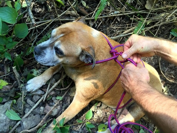 7.25.16 - Inventive Hikers Rescue Exhausted Dog5