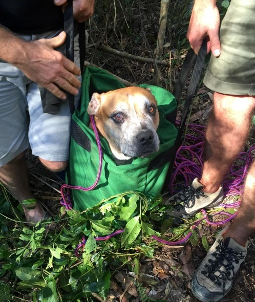 7.25.16 - Inventive Hikers Rescue Exhausted Dog9