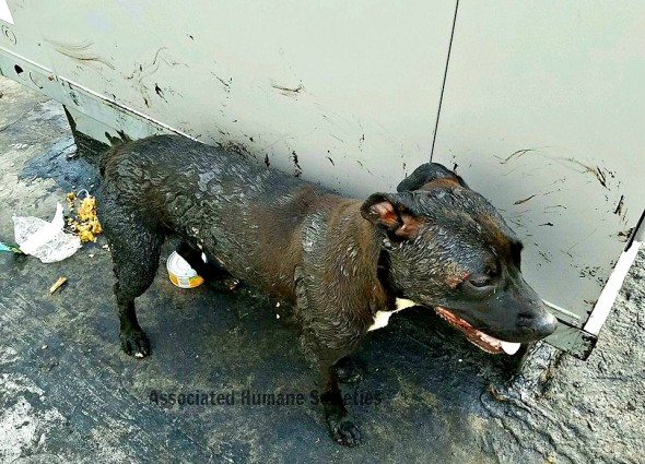 7.26.16 - Dogs Forced to Live on a Roof Rescued from the Bubbling Tar2