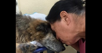 Woman Gives Beautiful Send-Off to the Dog She Saved 17 Years Ago
