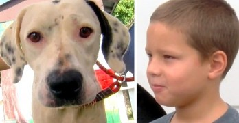 Seven-Year-Old Catches Stray Dog That Refused to Be Caught by Anyone Else