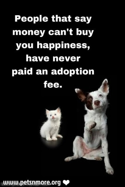 How Much Fee To Adopt Cat