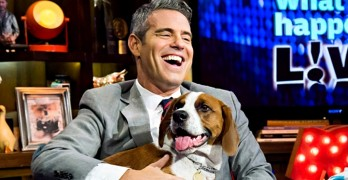 "Meet The Rescue Dog Who ""Saved"" Andy Cohen!"