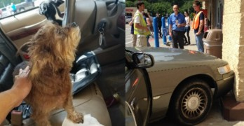 CAR-MA Strikes! Dogs Left in Running Car Crash it into a Walmart