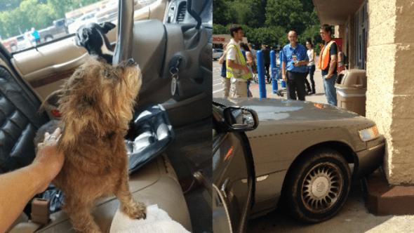 7.30.16 - WalMart Dog Crash2