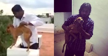 Dog Maliciously Launched from Roof in Viral Video Found Alive!
