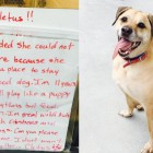 Homeless Person Surrenders Dog Hoping Someone Will Give Him a Better Life