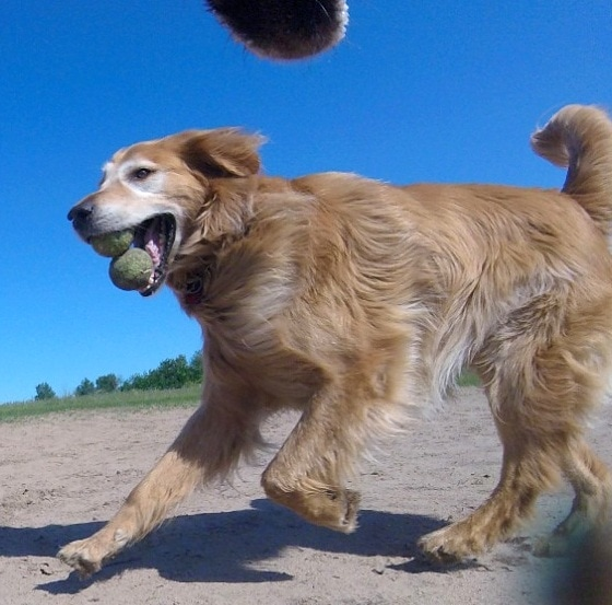 7.7.16 - Dog Takes the BEST Snaps With Go Pro Camera11