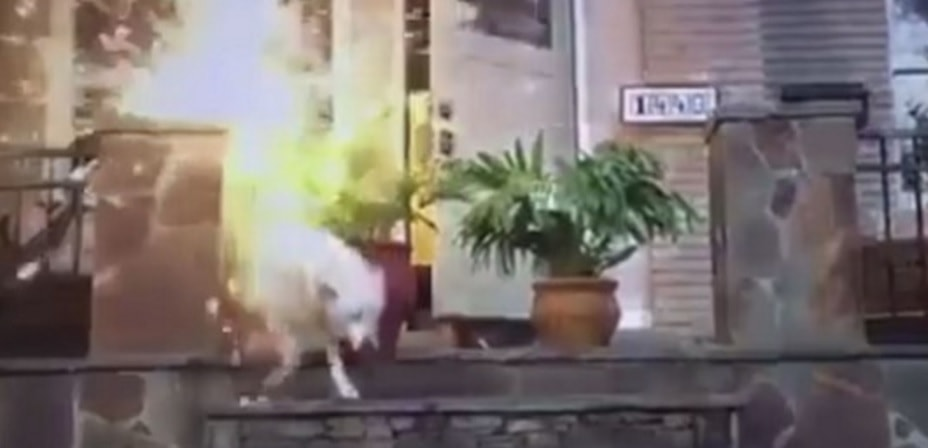 Man Gets Animal Cruelty Charges After Daughter Films Him Scaring Dog with Fireworks