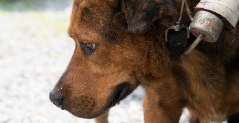 BREAKING NEWS: ASPCA Removes 41 Dogs From Tennessee Shelter