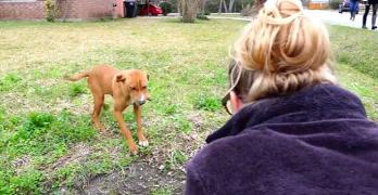 Rescue of Sunnyside Dog With Broken Leg