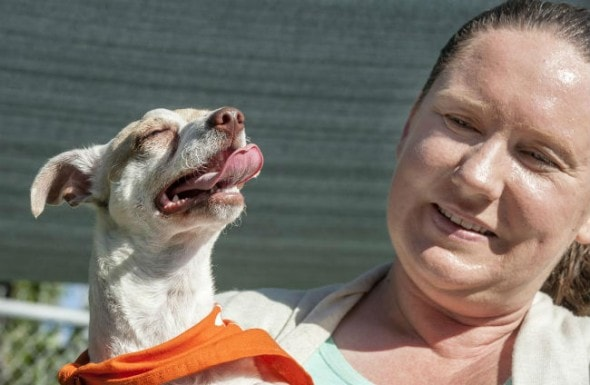 Katie Ingram of OC Animal Care holds Bubba. His adoptive parents wished to remain anonymous. Photo: Mark Rightmire, OC Register